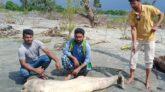 বঙ্গোপসাগরে সামুদ্রিক সম্পদ জলজ স্তন্যপায়ী প্রাণী হুমকিতে